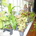 Our monthly stall of plants for sale - more than a few bargains to be had here!