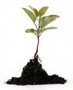 seedling-400x494